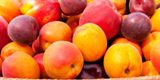 peches-nectarines-prunes